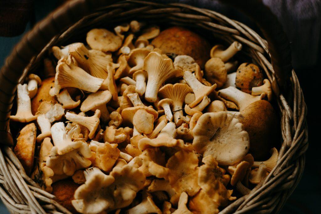 Flammkuchen mit Pilzen
